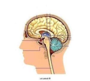 brain2grolierInc